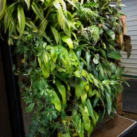 Image of a biofilter living wall build by Nedlaw Living Walls.